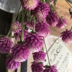 千日紅/花/ボタニカル/おでかけ/ドライフラワー 先日…お花屋さんで買ってきた 千日紅✨お…