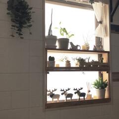 mt CASA/シルエット/窓辺のディスプレイ/クリスマス/クリスマスツリー/風景/... リビング窓に作った棚  グリーンの日向ぼ…