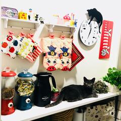 猫/猫との暮らし/ペット/雑貨/キッチン いい感じにマッチしてますฅ(ΦωΦ)ฅ