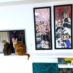 LIMIAペット/猫のいる暮らし/春/LIMIAペット同好会/にゃんこ同好会/うちの子ベストショット 我が家で唯一 季節感のある場所