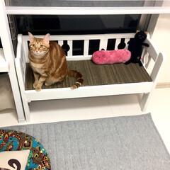 リメイク/ねこ/DIY/インテリア 元々は猫用ベッドだったのですが、 なかな…(1枚目)