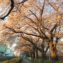 満開/桜🌸 桜がきれいに咲きました! 娘の引越しのお…