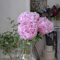ピオニー/花が好き/花に癒やされる/また来年/花のある暮らし/シャクヤク/... ほんとにステキな芍薬。  今年はこれにて…