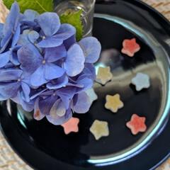 七夕/花のある暮らし/紫陽花/グミ/カルディコーヒーファーム/フォロー大歓迎/... 七夕ですね🎋 星のグミと一緒に⭐💙 天の…