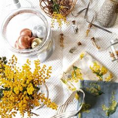 ドライフラワー/穏やかな暮らし/ナチュラルインテリア/置き画/テーブル/花のある暮らし/... 今日はミモザの日 今年の花と去年のドライ…