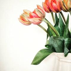 おうち時間/穏やかな暮らし/ビタミンカラー/チューリップ/花のある暮らし/暮らし あいにくの雨。 ビタミンカラーのチューリ…