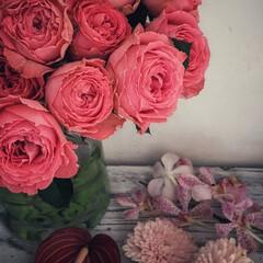 花のある暮らし/モカラ/マム/アンスリウム/バラ/花 ピンク系のお花。  可愛くって癒やされま…
