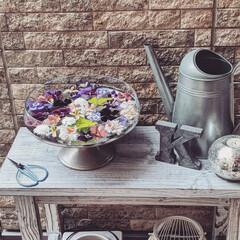 穏やかな暮らし/玄関ポーチ/庭の花/フローティングフラワー/ビオラ/ガーデニング/... お家のビオラ達をフローティングフラワーに…