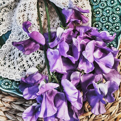 花の写真/生花/紫色の花/置き画/花のある暮らし/スイトピー/... キレイな紫色。 ずっと見ていられます💜 …