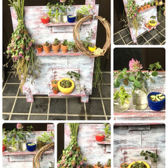 ボタニカル/DIY/雑貨/住まい/玄関/ハンドメイド ミニ植物が増えたので、飾りパネルを作って…