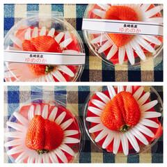 いちご 一粒パックの苺✨   可愛い(*´艸…