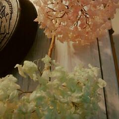 ドライ紫陽花 ドライあじさい漂白して色をつけてみたした…