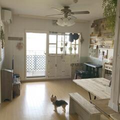 足場板/テーブルDIY/板壁/窓枠DIY/ペット/グリーン/... リビングセルフリノベーション