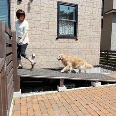 愛犬家住宅コーディネーター/スロープ/老犬/緩やかな/ゴムチップマット ウッドデッキへの上り下りには、愛犬の足に…