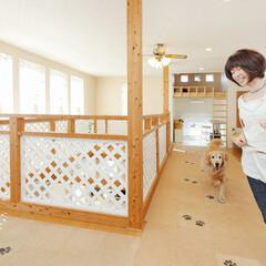 愛犬家住宅コーディネーター/室内ドッグラン/吹き抜け 2階に設けられた、LDKの吹き抜けの周囲…