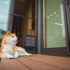 愛犬家住宅コーディネーター/ペットドア/ウッドデッキ/網戸用ペットドア/行き来自由 サッシ用のペットドアは見かけるようになり…