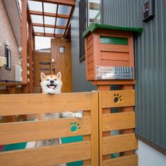 愛犬家住宅コーディネーター/足型/飛び出し防止/ゲート Sさん邸は通称「ケン太の家」。表情豊かで…