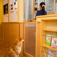 愛犬家住宅コーディネーター/キッチンゲート/引き戸/半透明 キッチンには出入りしないようにしつけられ…