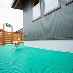 愛犬家住宅コーディネーター/人工芝/ドッグラン/雨上がり/グリップ 庭に設けられた、広々としたドッグランは人…