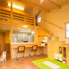 愛犬家住宅コーディネーター/愛犬の基地/階段下/階段下収納/ロフト ロフトに上る階段の下は、愛犬「ケン太」の…