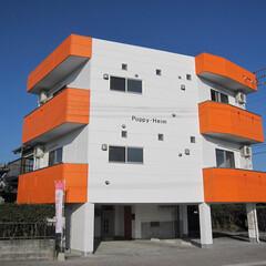 愛犬家住宅コーディネーター/女性専用/女性専用賃貸/オートロック 真っ白な外観にオレンジ色が鮮やかな外観で…