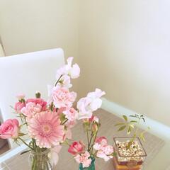 花/観葉植物 スイートピーの香りが良くて癒される!