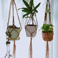 観葉植物/プラントバンキング/プラントハンガー/DIY/雑貨/100均/... おはようございます🌧️ 春の嵐です🍃  …