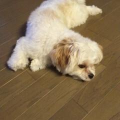 マルキャバ/犬 この寝かた難しくないのかな (1枚目)