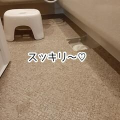 ジョンソン カビキラー本体 400g | JOHNSON(防カビ洗剤)を使ったクチコミ「お風呂のカビ掃除をしました🌟  ゴム手袋…」(8枚目)