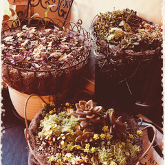 多肉植物/エクステリア/インテリア/住まい/収納/掃除/... 寒くなりました❄冬支度、ボチボチ外の葉っ…