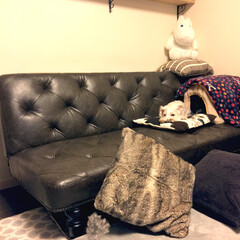 わんこRoom/DIY/セリア/インテリア/住まい/節約/... 老犬の昇降を考慮して、座面の低いソファー…