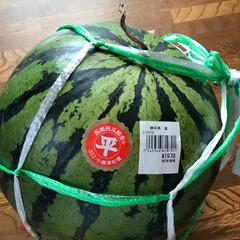 令和の一枚/みんなにおすすめ 毎年、静岡県田方郡函南町の農家さん👨🌾…(1枚目)