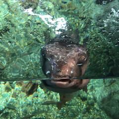 水族館/令和の一枚/至福のひととき/おでかけ/おでかけワンショット 新江ノ島水族館の可愛い💕お魚とイルカ🐬と…