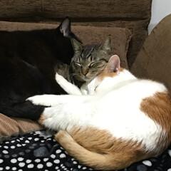にゃんにゃん/猫の日/LIMIAペット同好会/ペット/ペット仲間募集/猫/... 今日は猫の日🐈なので ウチのにゃんズ 投…(2枚目)