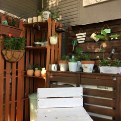 お気に入りの場所/癒し/ガーデニング 少しずつ手を加えた 庭の一角🌳 毎朝 水…