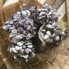 tomomoさん/感激/ドライフラワー/インテリア tomomoさんから 紫陽花のドライフラ…