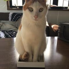 にゃんにゃん/猫の日/LIMIAペット同好会/ペット/ペット仲間募集/猫/... 今日は猫の日🐈なので ウチのにゃんズ 投…