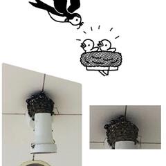 雛/ツバメ 今年もツバメの巣が…。 ヨークベニマルの…