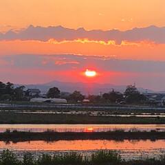 吠えたくなりました(笑)/太陽にほえろ 今日の夕焼け! 太陽が大きく見えました 🌞