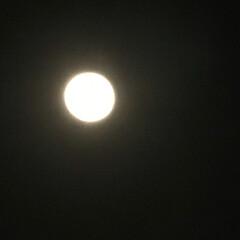 スーパームーン 今日は、一年で一番大きな 満月だそうです。