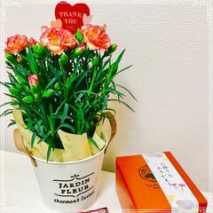 スイートポテト/カーネーション/母の日/フード/グルメ 母の日のプレゼント 娘から 送られてきま…