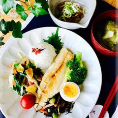 ワンプレート/お家ご飯/朝ご飯/フード 朝ご飯 ごはん  味噌汁(キャベツ) 鯖…