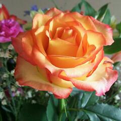 花のある生活/花のある暮らし/花/綺麗/穏やかな日/春/...
