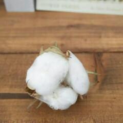 ガーデニング 小さな秋、お庭で見つけました🍂 真っ白な…