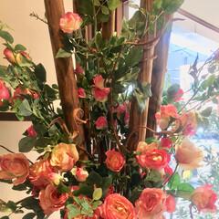 おでかけ/インテリア/玄関 綺麗なお花💐に癒されて💕
