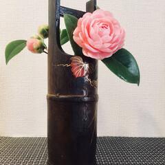 生け花/生花/インテリア お花をいただきました💕