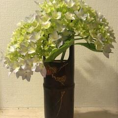 生花/紫陽花 紫陽花を頂きました💐  お花のある生活 …