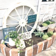ナチュラルキッチン/セダム/多肉植物/ルーバー扉/ナンバープレート/フレンチ/... 玄関に花壇を作りました♡ 見様見真似でモ…
