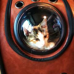ペットバッグ 宇宙船カプセル型ペットバッグ リュック機能付き アメリカ人気モデル ペットバッグ 犬猫兼用(その他キッチン、日用品、文具)を使ったクチコミ「宇宙船型キャリーリュック」