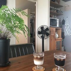 アイスコーヒー/アジアンタム/ツートンコーヒー/IKEA/イケア/ダイニング/... 夏も終わり頃にやっと洗った扇風機。 おい…(1枚目)